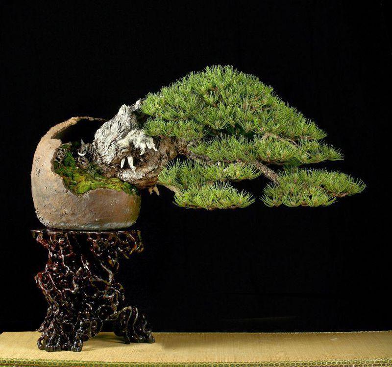 Prizes for Bonsai italia