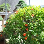 Garden08_1