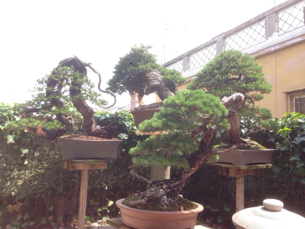 Italianbonsaidream garden for Bonsai italia
