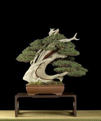 JUNIPERUS_ITOIGAWA_TOKONAME_POT_UBI_MENTION_OF_MERIT_2013