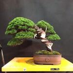 MauroTrees_0116_08