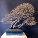 MauroTrees_0116_13