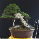 MauroTrees_0116_24