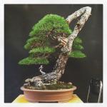MauroTrees_0116_25