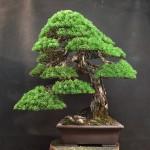 MauroTrees_0116_26