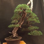 MauroTrees_0116_27