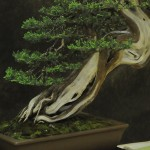 UBI_Bonsai_2013_06