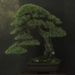 UBI_Bonsai_2013_08