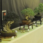 UBI_Bonsai_2013_09