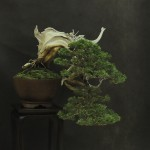UBI_Bonsai_2013_12