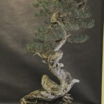 UBI_Bonsai_2013_13
