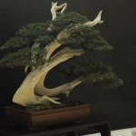 UBI_Bonsai_2013_17