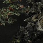 UBI_Bonsai_2013_19