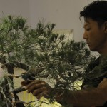 UBI_Bonsai_2013_20